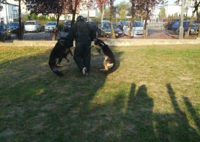 Pokaz psów policyjnych