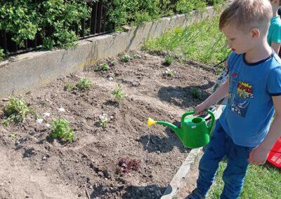 Zakładamy ogródek kwiatowy